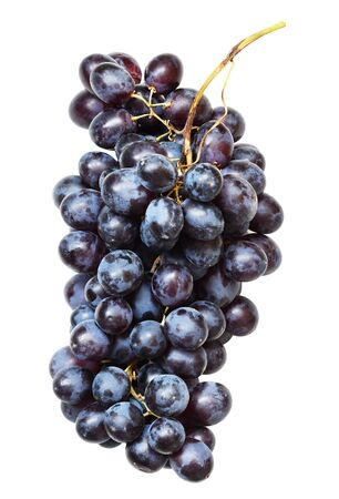 Bunch of blue grapes isolated on white 版權商用圖片