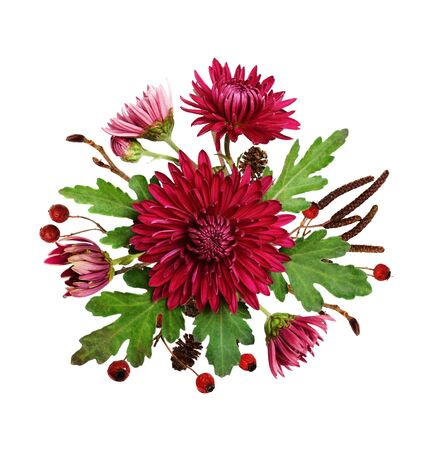Purple chrysanthemum flowers and autumn dry twigs in autumn arrangement isolated on white background. Top view. Flat lay.