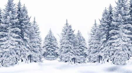 Snow-covered trees in winter forest. Nature background.