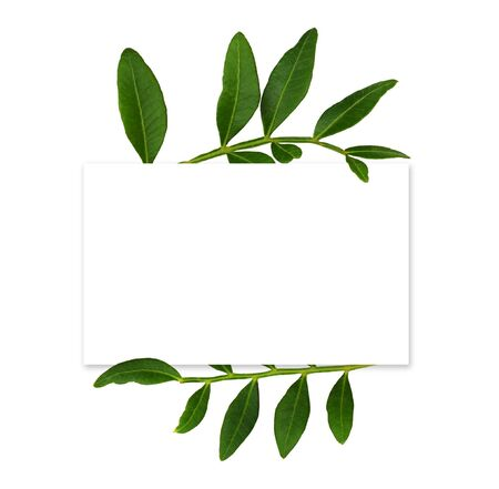 White card with decorative green leaves isolated on white background