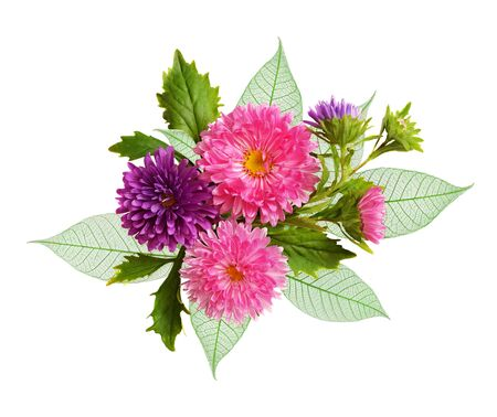 Aster flowers and green leaves in an autumn composition isolated on white