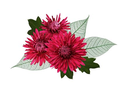 Chrisanthemum flowers and leaves in a floral autumn arrangement isolated on a white Stock Photo
