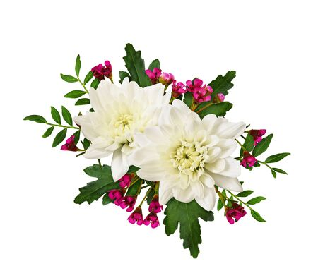 Chrisanthemums, waxflowers and green leaves in a floral arrangement isolated on a white