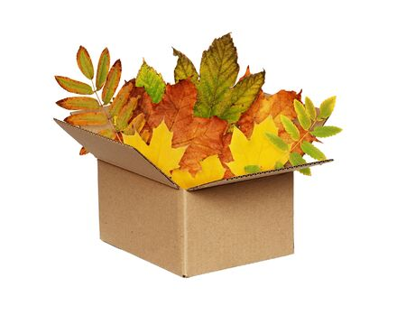 Opened craft cardboard box with colorful autumn leaves isolated on white background
