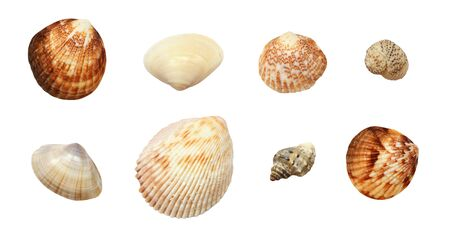 Set of different seashells isolaed on white