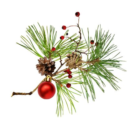Pine branch with cones, Christmas decoration and red dry berries isolated on white 版權商用圖片