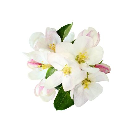 Floral arrangement with apple flowers isolated on white