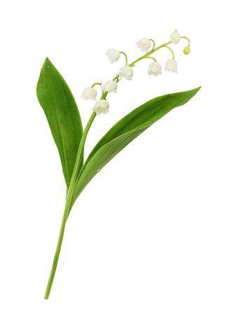 Primer plano de la flor de lirio de los valles aislado en blanco Foto de archivo