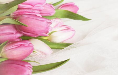 Pink tulip flowers on white tulle background 免版税图像 - 140108582