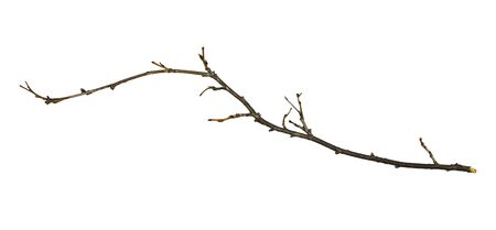 Dry twig isolated on white background