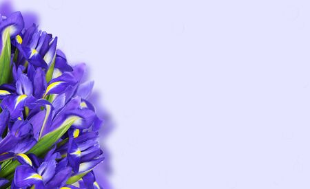 Bouquet of blue iris flowers in a corner on lilac background