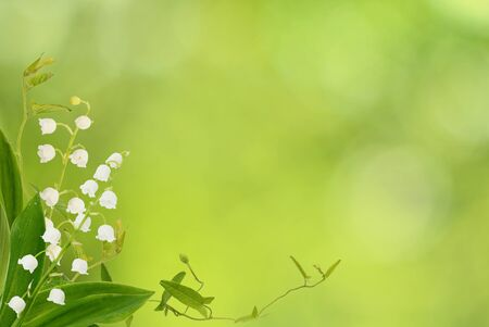 Lily of the valley flowers and bindweed sprigs in a corner arrangement on green bokeh background