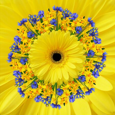 Bunch-flowered narcissus flowers, blue knapweedsand yellow gerbera in a spring round arrangement on floral background Фото со стока