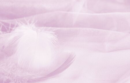 Plumas suaves sobre fondo drapeado de tul en tonos rosados