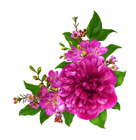 Pink peony and freesia flowers with green leaves in a corner arrangement isolated on white background