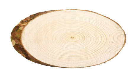 Oval cross section of pine tree isolated on white