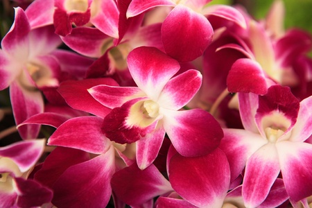 olant: beautiful orchid flowers Stock Photo