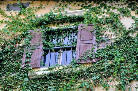 window old plant background with stone wall  photo