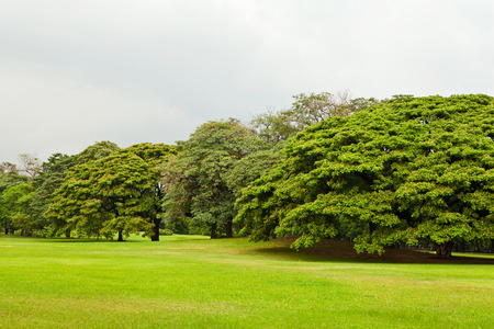 Green trees in park photo