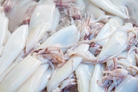 Squid Reklamní fotografie
