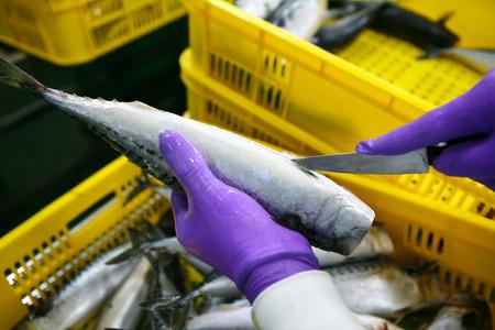 Close-up van mensen snijden van tonijn in visindustrie Stockfoto