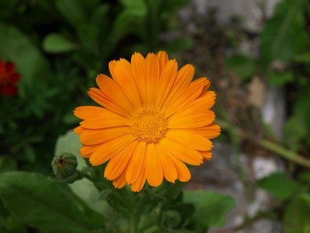 median: Flowers median strip
