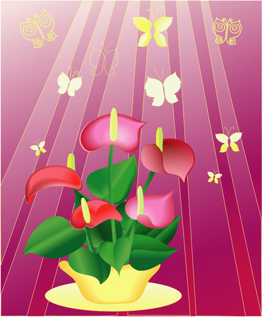 A bouquet of flowers Anturium around flying butterflies, vector Vector