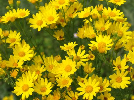 Summer glade yellow flowers stock photo picture and royalty free stock photo summer glade yellow flowers mightylinksfo