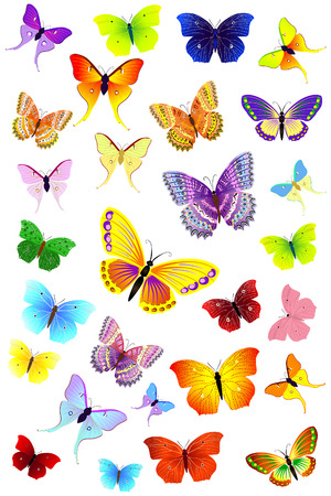 butterfly wings: Butterflies Party