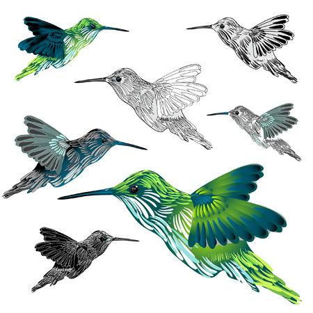 hummingbird: hummingbird Illustration