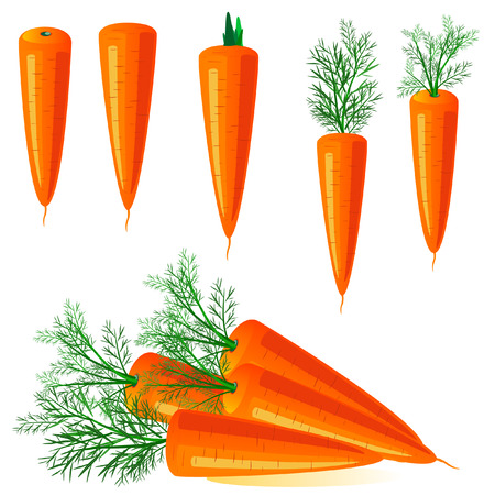 carrots Stock Vector - 6514003
