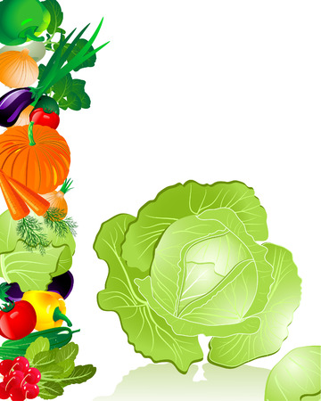 vegetables cabbage Stock Vector - 6514024