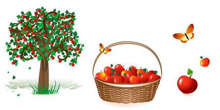 tree and a basket of apples Vector