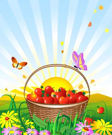 basket of apples in the meadow