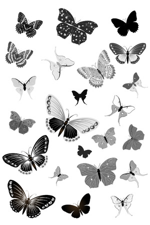 set of black butterflies Stock Vector - 6678640