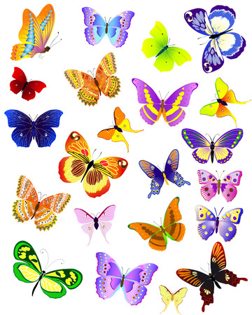 set of different butterflies Illustration