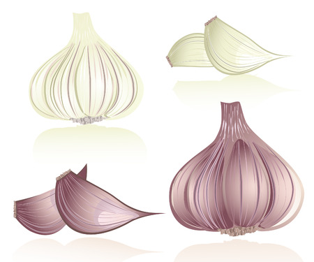 garlic Stock Vector - 6735935