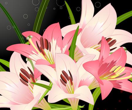 royal lily Stock Vector - 6735932