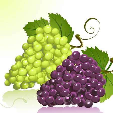 Grapes Stock Vector - 6794386