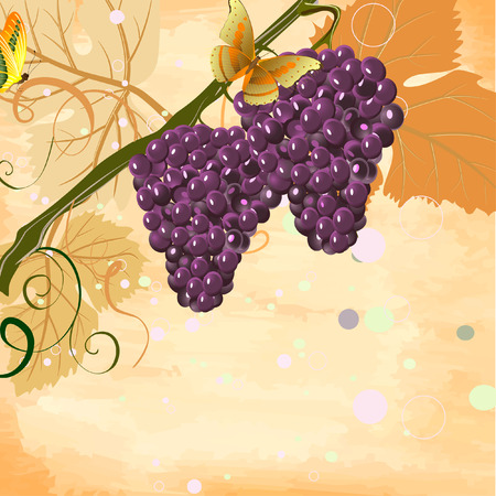 bunches Stock Vector - 7028329