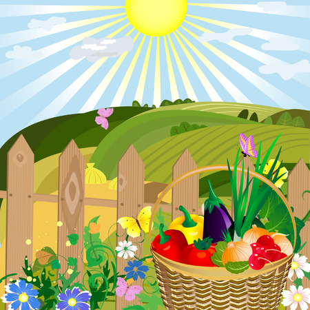 harvest of vegetables in an outdoor Vector