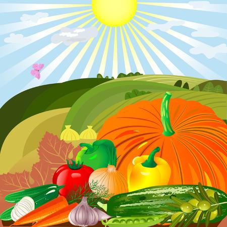 harvest of vegetables in an outdoor Vector