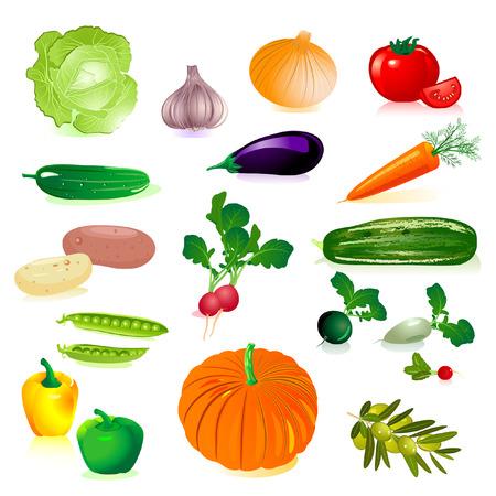 Repollo: conjunto de verduras crudas  Vectores