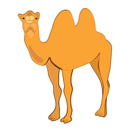 zoology: Camel Illustration