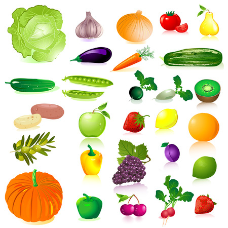 Repollo: Verduras y frutas Vectores