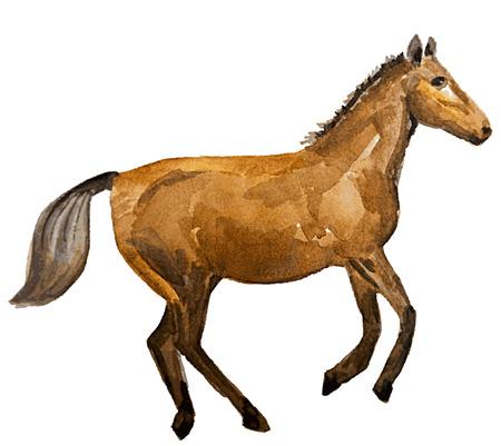 horse Stock Vector - 8753358