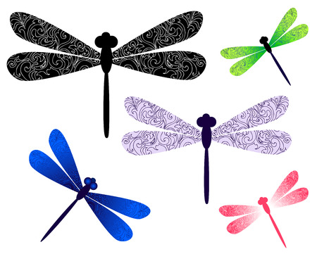 the dragonfly: dragonfly