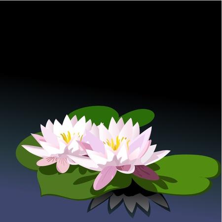 garden pond: lily on black water Illustration