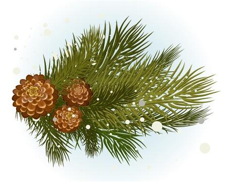 fir cone: rama de pino con el cono