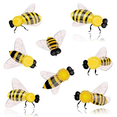 abeja reina: insectos abejas Vectores
